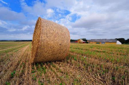 Bale of straw on farmland in Denmark photo