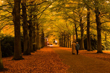 Beautiful autumn colors in the forest Stock Photo - 5849914