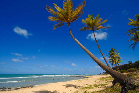 Palm trees and a beautiful beach at Praia do Amor near Pipa Brazil photo