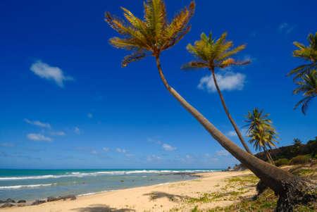 Palmen und einer schönen Strand von Praia tun Amor in der Nähe Pipa-Brasilien