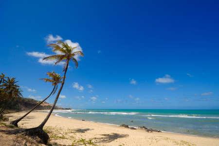 brazil beach: Palm trees and a beautiful beach at Praia do Amor near Pipa Brazil Stock Photo