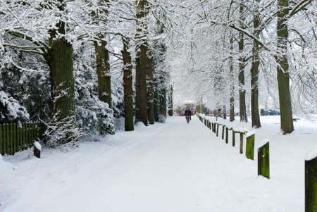 Beautiful winter landscape in the Netherlands ( Elswout Overveen) photo