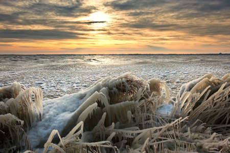 markermeer: cold winter sunrise  landscape with reed covered in ice, markermeer, warder , The Netherlands Stock Photo