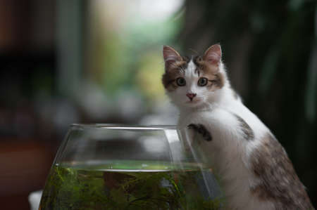 cute young kitten caught in the act of fishing in the bowl photo