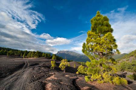 Camino de tierra a través del paisaje hermoso de lava en la Cumbre Nueva en La Palma, Islas Canarias, España