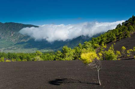 Schöne Lava-Landschaft auf der Cumbre Nueva in La Palma, Kanarische Inseln, Spanien Standard-Bild - 8811704