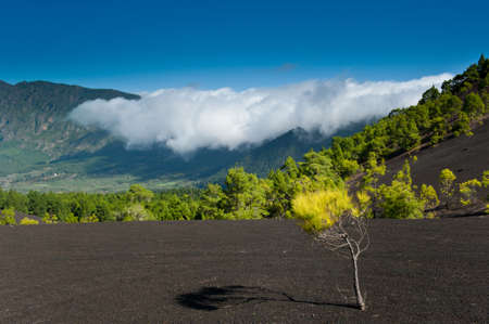 Schöne Lava-Landschaft auf der Cumbre Nueva in La Palma, Kanarische Inseln, Spanien Lizenzfreie Bilder - 8811704