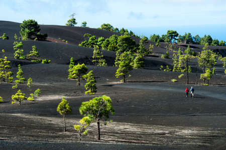 Beautiful lava landscape on the Cumbre Nueva in La Palma, Canary islands, Spain Stock Photo - 8822022