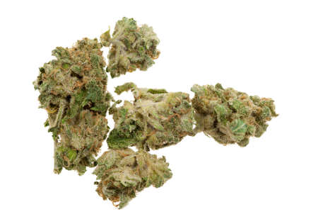 Cerca de la marihuana (Cannabis) disparó con una lente de macro   Foto de archivo