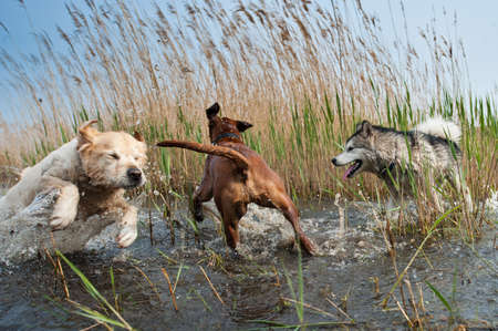 spring training: Cute dogs having fun in the water