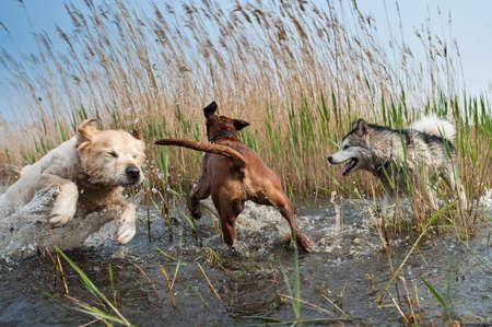 Cute dogs having fun in the water Фото со стока - 9438432