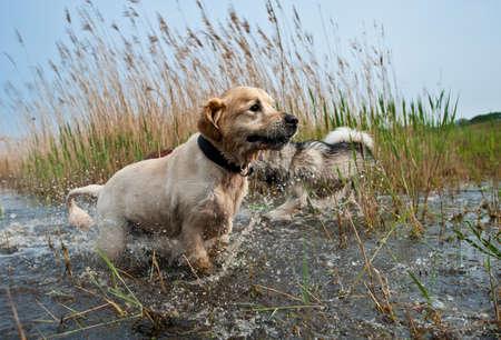 Lindas perros que se divierten en el agua
