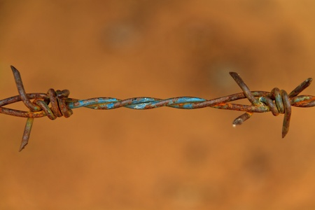 Close-up rust barbed wire photo