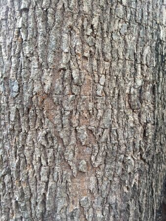 Bark pattern of wood grain