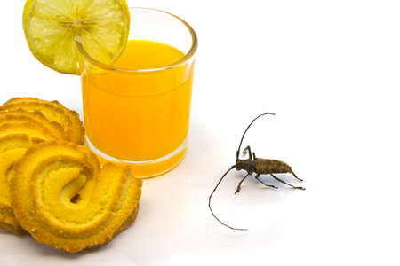 insect attracted by the sweet scent of orange juice with cookies isolated white Stock Photo - 21192240
