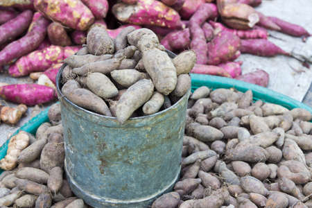 Fresh Yacon roots in steel cans for sale in the market ,Thailand