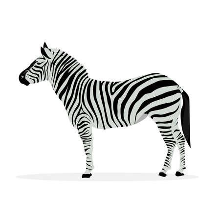 Illustratie van zebra profiel geïsoleerd op een witte achtergrond. Vector Illustratie