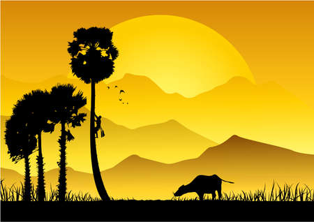 Silhouette of Asian farmer climbing sugar palm in the garden,on natural background