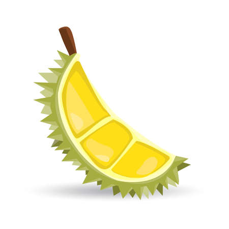 A half of a durian fruit on white background.  illustration.