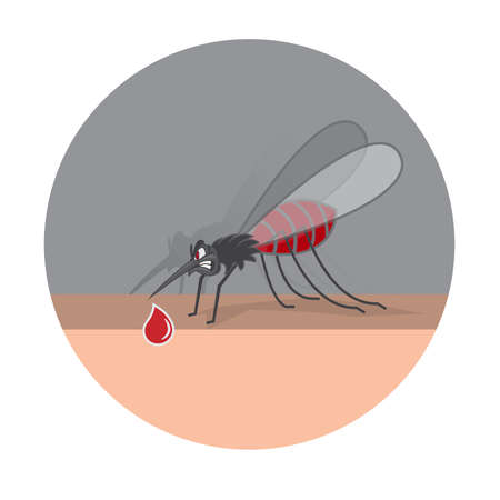 Mosquito bite on skin hand . Drinks the blood. Bloodsucking pest. Vector illustration