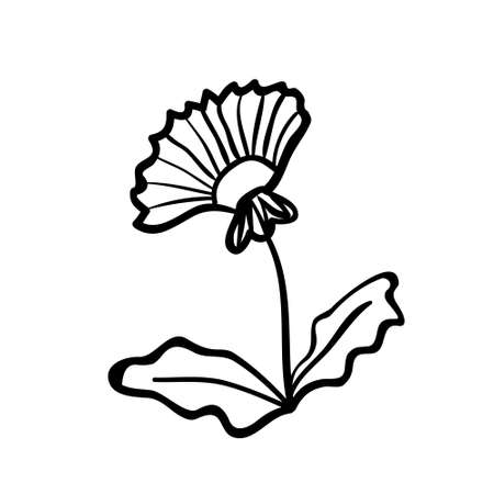 Vector hand drawn dandelion. Black sketch on white background. Vector