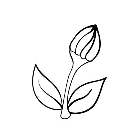 Vector hand drawn spring flower. Black sketch on white background. Vector