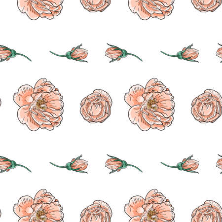 briar: Briar rose sketch seamless pattern. Pink flowers with black outline on white background. Vector illustration.