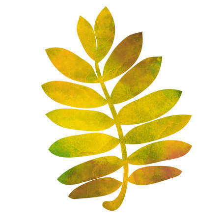 mixedmedia: Hand drawn watercolor bright rowan leaf isolated on white background