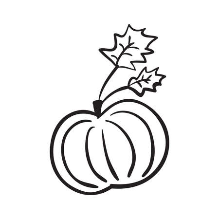 Hand drawn pumpkin with leaves vector illustration. Black outline sketch isolated on white background.