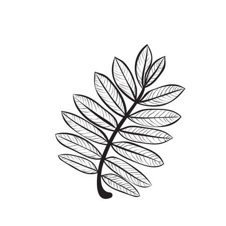 Hand drawn rowan leaf vector illustration. Black outline sketch isolated on white background. Stock Illustratie