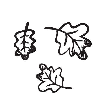 Hand drawn oak leaves vector illustration. Black outline sketch isolated on white background.
