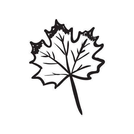 Hand drawn maple leaf vector illustration. Black outline sketch isolated on white background.