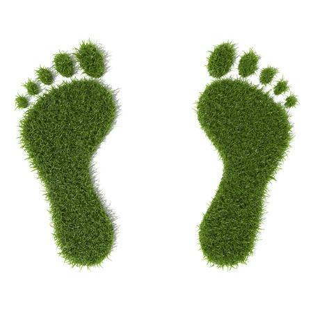 footprint: Pasto verde crece huellas