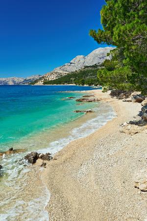 adriatic: Amazing Adriatic Sea bay with pines in Croatia Stock Photo