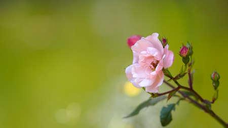 position d amour: Une belle fleur sur un fond flou