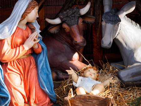 religious: Christmas and manger scene with life size statues of Virgin Mary, Jesus Child, steer, donkey in a plaza.