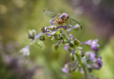 seize: The fruit fly taste sweet of the basil flowers