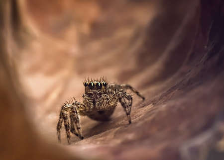 pubescent: The jump spider discover for exit of tunnel Stock Photo