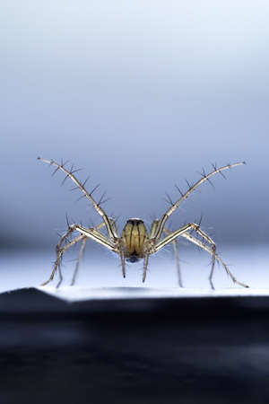 omnipresent: Macro photography of the jump spider is ready for fighting Stock Photo