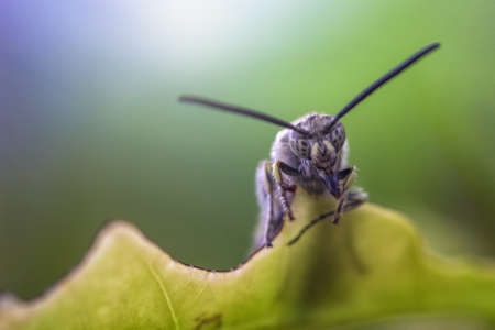 invade: Black soldier fly on a leaf with scary face, taken in softly focus and blurred of colorful background. He smile with scary face and fear eyes Stock Photo