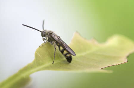 intervene: Black soldier fly sitting on a foliage, taken shot side view photography and blurred green background.