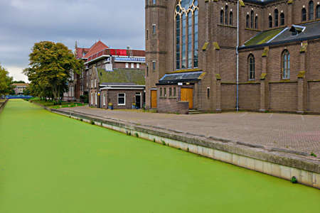Green algae covered canal in The Hague