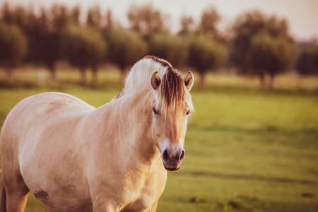 portrait of a horse in ranch during summer season male horse beautiful 版權商用圖片