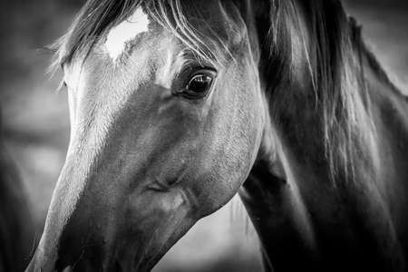 artistic dark portrait of a horse in black and white grey scale selective focus background blur