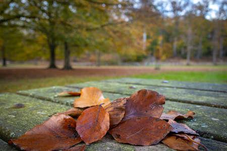 fallen autumn leaves macro photography fall season