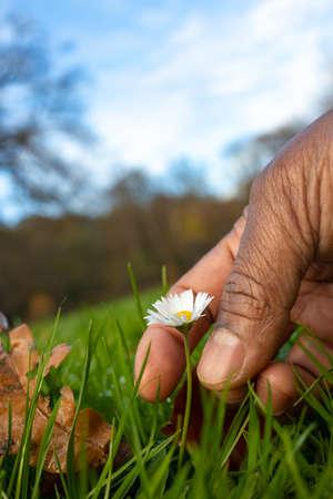 farmers human hand flower plucking grass image