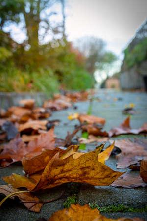 fallen leaves in the autumn season in apark in Europe