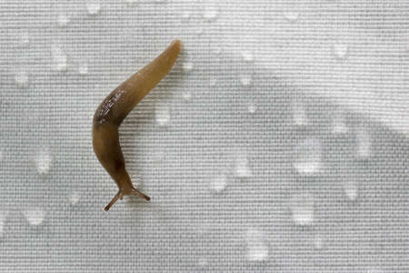 synthetic: Snail on synthetic fabric with rain drops