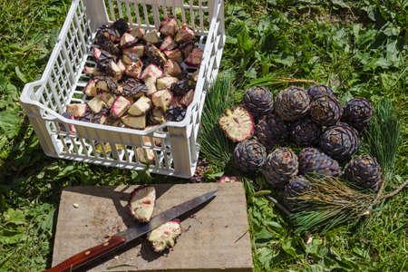 自然医学です。バルサミコ酢のシロップの準備のため Pinus Cembra マツ円錐形の切断