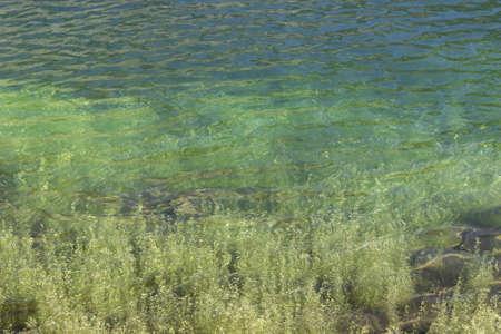 Monochromatic green background of an alpine lake with aquatic plant. Banco de Imagens